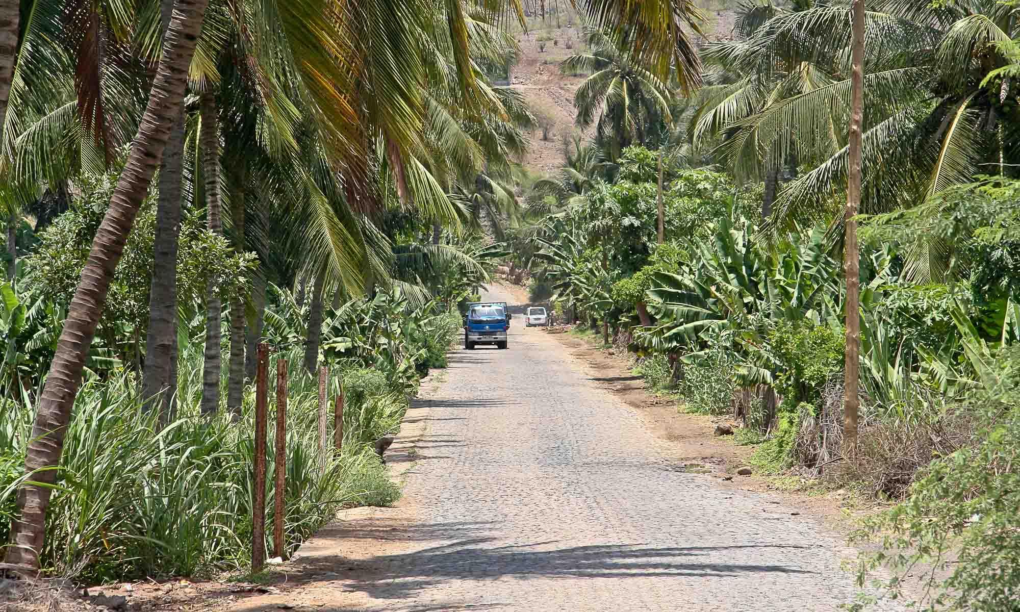 Bananen - en kokosnotenplantage in Pedra Badejo aan de oostkust.